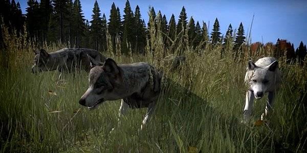 dayz-early-wolf-model-w-i-p-1